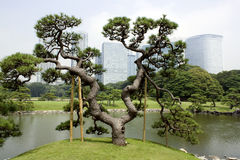 Traditionele Japanse tuin met bureaugebouwen Stock Afbeelding