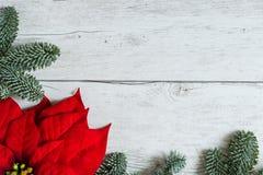 Traditionele Kerstmisachtergrond met Poinsettiabloem Royalty-vrije Stock Afbeeldingen
