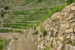Traditionele mediterrane terrasvormige wijngaard, Ligurië Royalty-vrije Stock Foto's