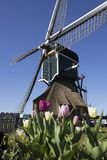 Traditionele Nederlandse windmolen met tulpen in Leiderdorp, Holland Stock Foto