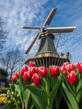 Traditionele Nederlandse windmolens met trillende tulpen Royalty-vrije Stock Foto's