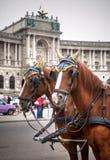 Traditionele paardbus Fiaker in Wenen Oostenrijk Royalty-vrije Stock Afbeeldingen
