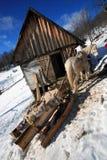 Traditionele paardslee stock fotografie