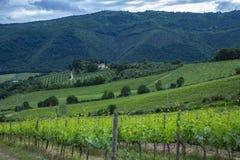 Traditionele platteland en landschappen van mooi Toscanië Wijngaarden in Italië Wijngaarden van Toscanië, het gebied van de Chian royalty-vrije stock foto