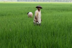 Traditionele rijstlandbouwers royalty-vrije stock foto