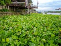 Traditionele Thaise huisstijl dichtbij de rivier in Thailand met de mooie blauwe hemel van de waterhyacint Stock Foto