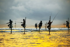 Traditionele vissers op stokken bij de zonsondergang in Sri Lanka Royalty-vrije Stock Afbeeldingen