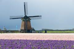 Traditionele windmolen met hyacintbloemen in Nederland Stock Foto