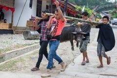 Traditionell begravning i Tana Toraja Fotografering för Bildbyråer