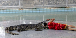 Traditionell für Thailand-Show von Krokodilen Lizenzfreie Stockfotografie