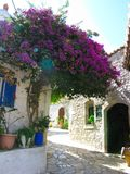 Traditionell gata med den ljusa bougainvillean i Grekland Royaltyfri Bild