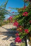 Traditionell grekisk dörr med färgrika blommor Royaltyfria Foton