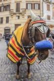 Traditionell häst i Rome Royaltyfri Foto