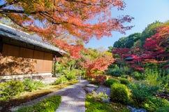 Traditionell japanträdgård royaltyfria bilder