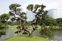 Traditionell japanträdgård med kontorsbyggnadar Fotografering för Bildbyråer