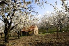 traditionell lantbrukarhemmudfruktträdgård royaltyfri foto