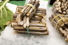 Traditionell skaldjur solen, marin- tvåskaligt skaldjur, på isen på marknaden ställer ut fotografering för bildbyråer