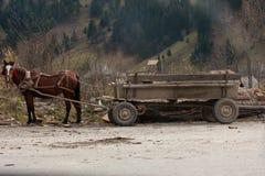 traditionell vagnshäst Royaltyfri Bild