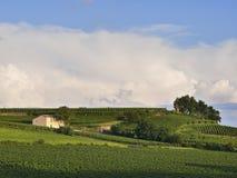 Traditionell vingård Saint Emilion Royaltyfria Foton