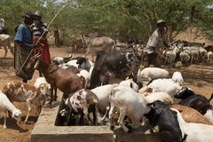 Traditionella afrikanska nomader Fotografering för Bildbyråer