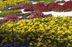 Traditionella 59 blommar utställningen, 2014 i Kiev, Ukraina Royaltyfri Bild