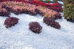 Traditionella 59 blommar utställningen, 2014 i Kiev, Ukraina Royaltyfria Foton