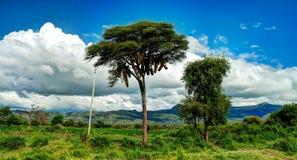 Traditionella ethiopian bikupor i den Nachisar nationalparken Chamo sjö, Etiopien Arkivbilder