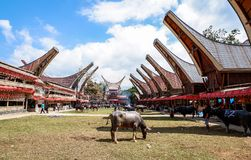 Traditionella festivaler av Torajan på Sulawesi royaltyfri foto