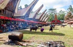 Traditionella festivaler av Torajan på Sulawesi royaltyfria bilder
