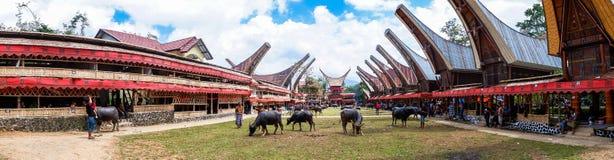 Traditionella festivaler av Torajan på Sulawesi arkivfoto