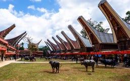 Traditionella festivaler av Torajan på Sulawesi fotografering för bildbyråer