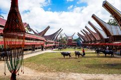 Traditionella festivaler av Torajan på Sulawesi arkivbilder