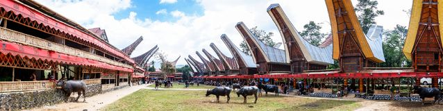 Traditionella festivaler av Torajan på Sulawesi arkivbild