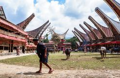 Traditionella festivaler av Torajan på Sulawesi royaltyfria foton