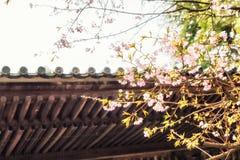Traditionella japanska taktegelplattor och blommasakura blommar i S Arkivfoton
