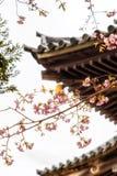 Traditionella japanska taktegelplattor och blommasakura blommar i S Arkivfoto