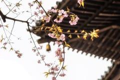 Traditionella japanska taktegelplattor och blommasakura blommar i S Arkivbilder
