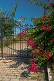 Traditionelle griechische Tür mit bunten Blumen Stockfotos