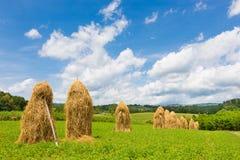 Traditionelle Heustapel auf dem Feld Stockbild