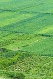 Traditionelle Landwirtschaft Stockbilder
