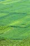 Traditionelle Landwirtschaft Stockfoto