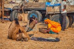 Traditionelle Messe in Pushkar Frau sammelt die geschissenen Kamele - Brennstoff f stockfotos