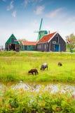Traditionelle niederländische alte hölzerne Windmühle in Zaanse Schans Stockbilder
