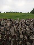 Traditionelle Steinwand um grüne Wiese in Irland Stockfoto