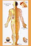 Traditioneller Chinese-Akupunktur-Diagramm Lizenzfreie Stockbilder