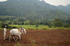Traditioneller indischer Landwirt Stockbilder