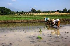 Traditioneller Landwirt Stockbilder