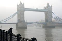 Traditioneller London-Rabe, der vor Turm-Brücke steht Stockfotografie