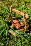 Traditioneller Ostern-Korb Lizenzfreies Stockbild