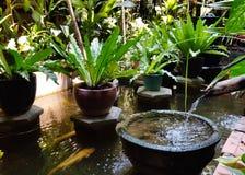 Traditioneller Wassergarten in einem kambodschanischen Haus Wässern Sie ein großes leafe lizenzfreie stockbilder